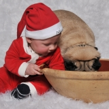 Julefoto med Mops
